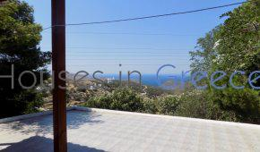 Andros, house with huge land for sale